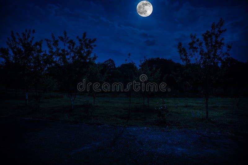 the best attitude classic save off Route De Montagne Par La Forêt Une Nuit De Pleine Lune ...