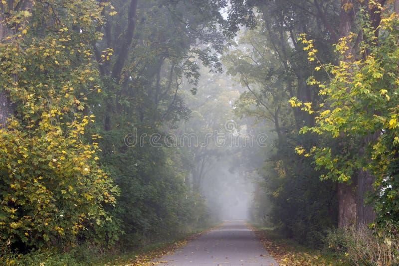 Route de parc avec le brouillard image stock