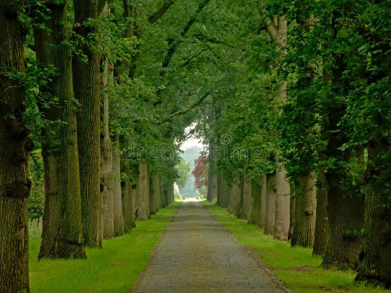 Route de pavé rond avec les ruelles brumeuses des arbres dans une forêt verte de ressort dans Kalmthout images stock