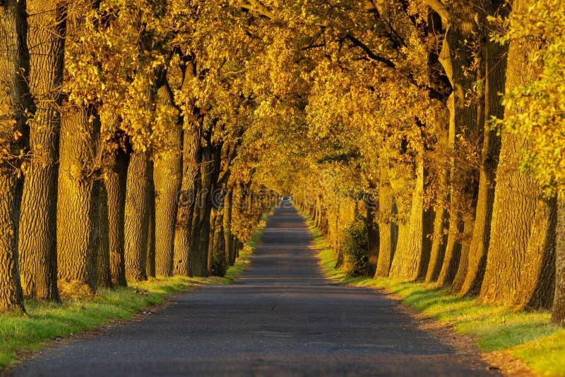 Route de paysage d'automne avec les arbres colorés Grande allée de chêne Autu images libres de droits