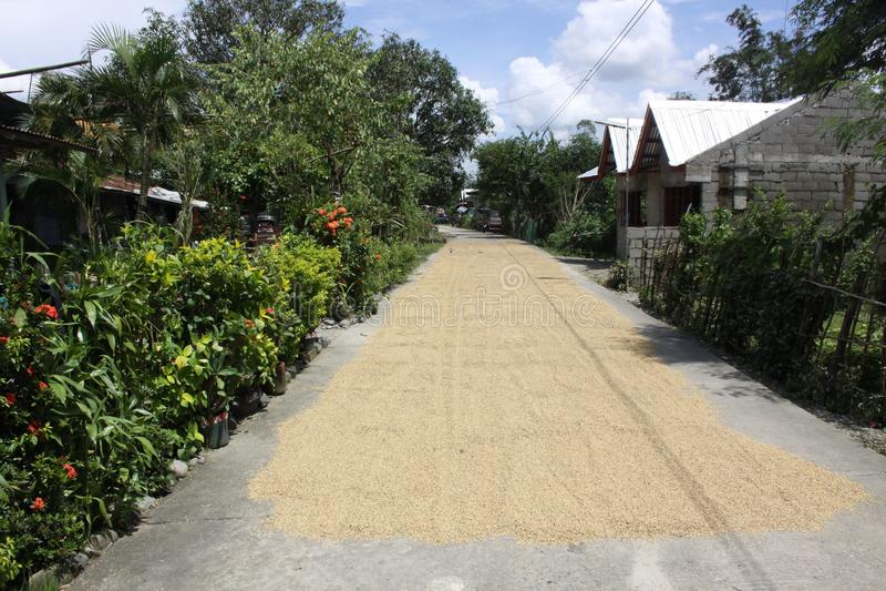 Route de riz images stock