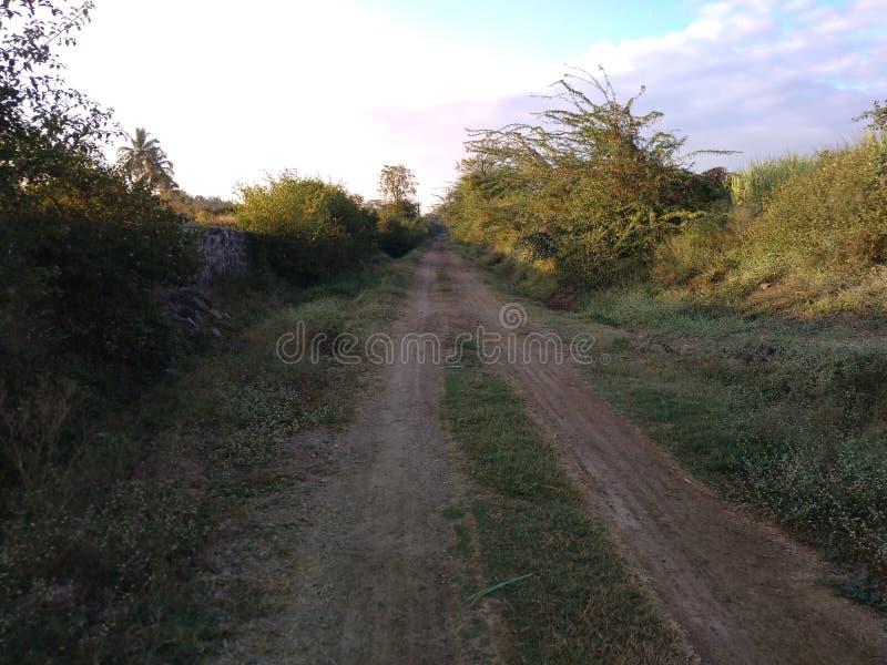 Route de sol avec l'herbe verte photographie stock