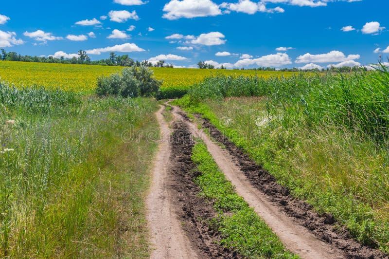 Route de terre par le pré au gisement fleurissant de tournesol photographie stock
