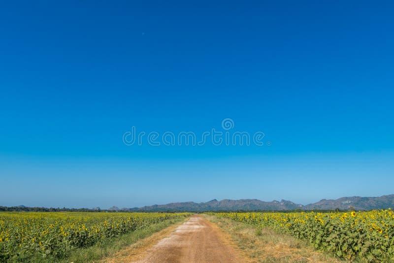 Route de tournesol photographie stock libre de droits