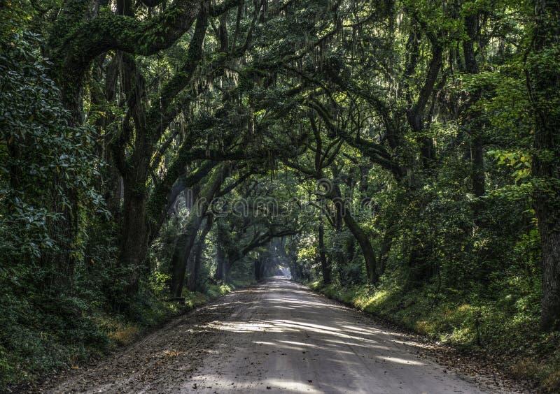 Route de tunnel de chêne à la plantation de baie de botanique en île S d'Editso image stock