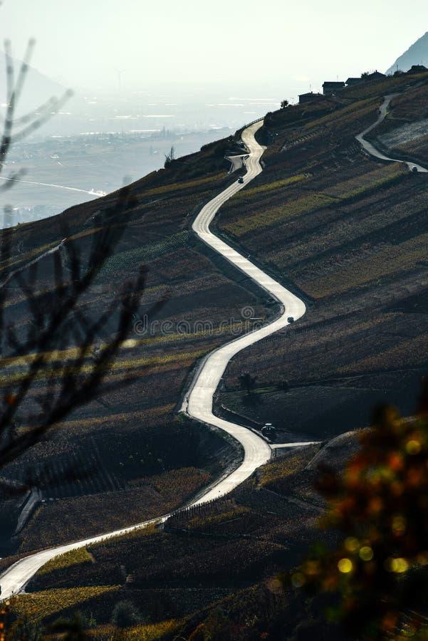 Route de zigzag dans les vignobles, pente de la montagne, vue de contraste photographie stock libre de droits