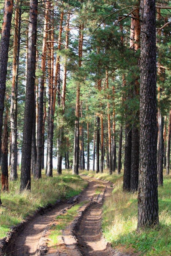 Route en bois photographie stock libre de droits
