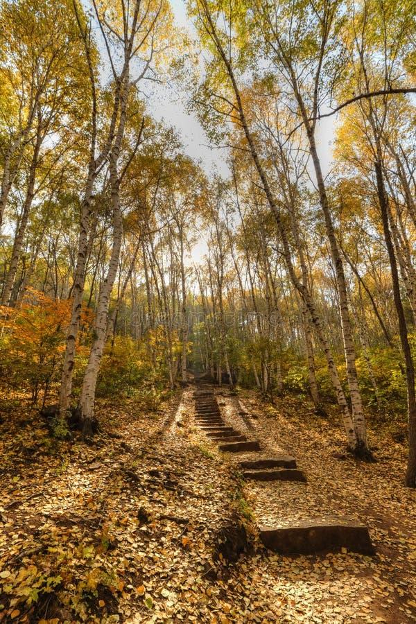 Route en bois photo libre de droits
