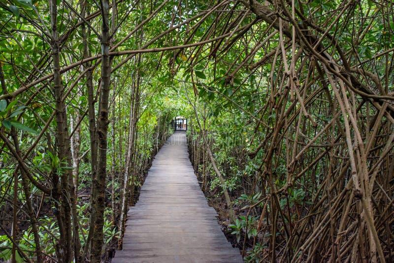Route en bois parmi des jungles images stock