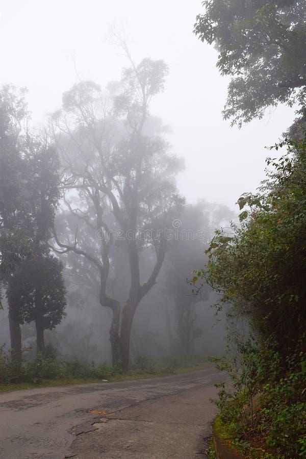 Route en Misty Climate avec des arbres des deux côtés photographie stock libre de droits
