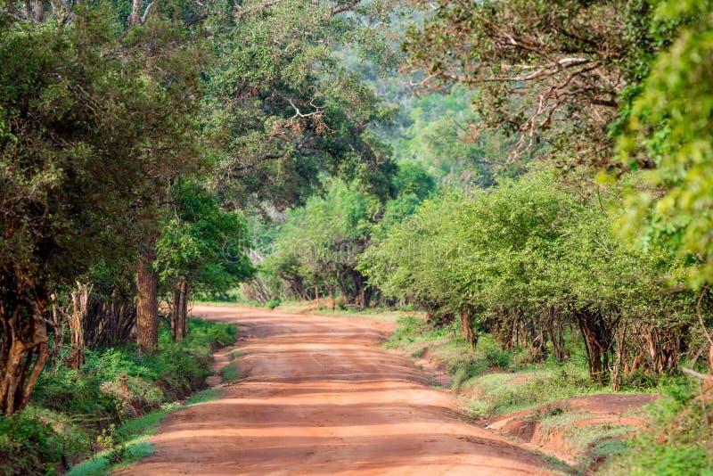 Route en parc national de Yala photographie stock libre de droits