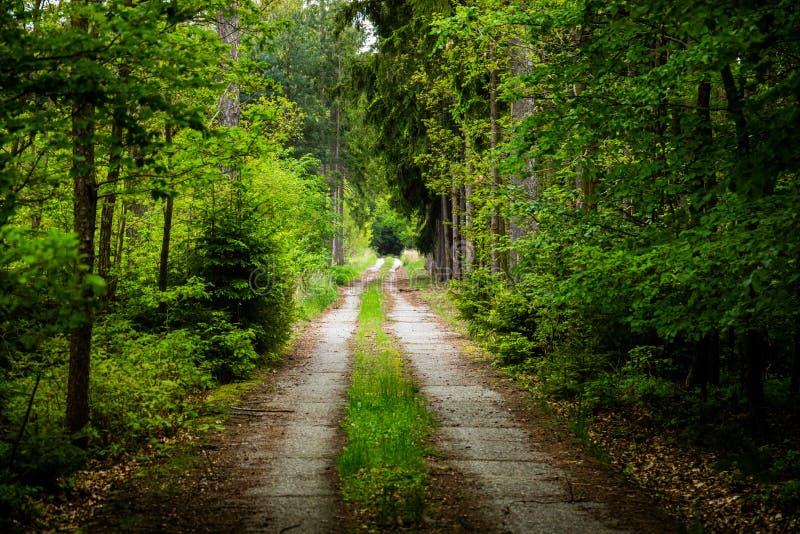 Route en parc national Sumava de forêt de début de l'été R?publique Tch?que image stock