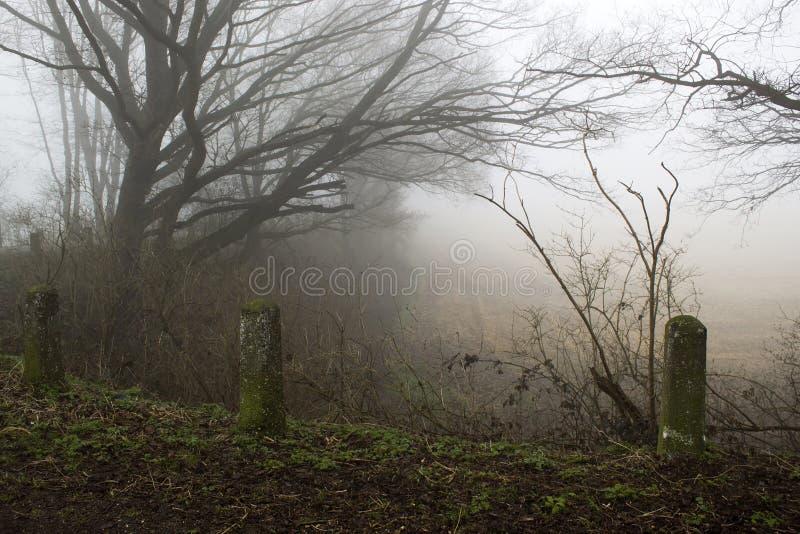 Route et arbres brumeux Paysage de début de la matinée, hiver, photos libres de droits