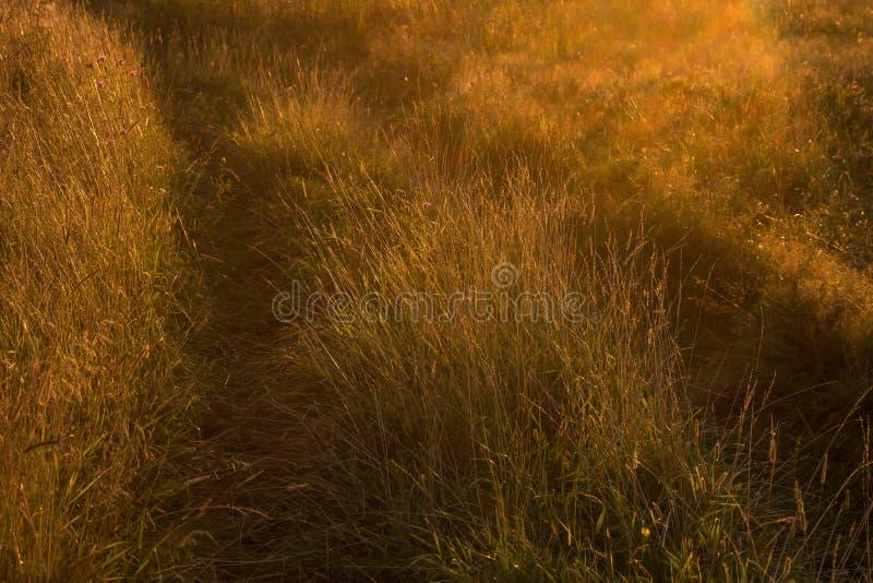 Route et herbe dans le domaine au coucher du soleil photographie stock