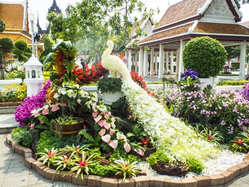 Route fascinante gracieuse de vert de fleurs de paon belle photo stock