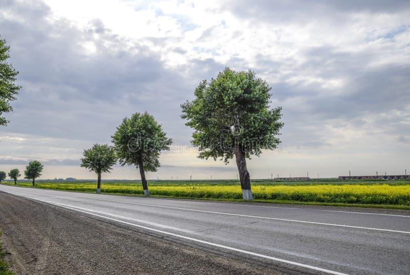 Route goudronnée avec des arbres sur le bord de la route Champ de coup sec et dur se développant photo stock