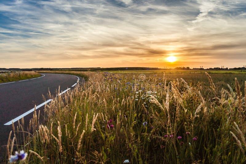 Route goudronnée dans le paysage plat des Pays-Bas pendant la somme photographie stock