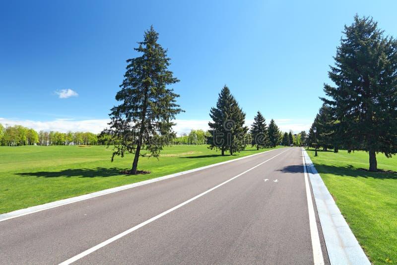 Route goudronnée en parc images libres de droits