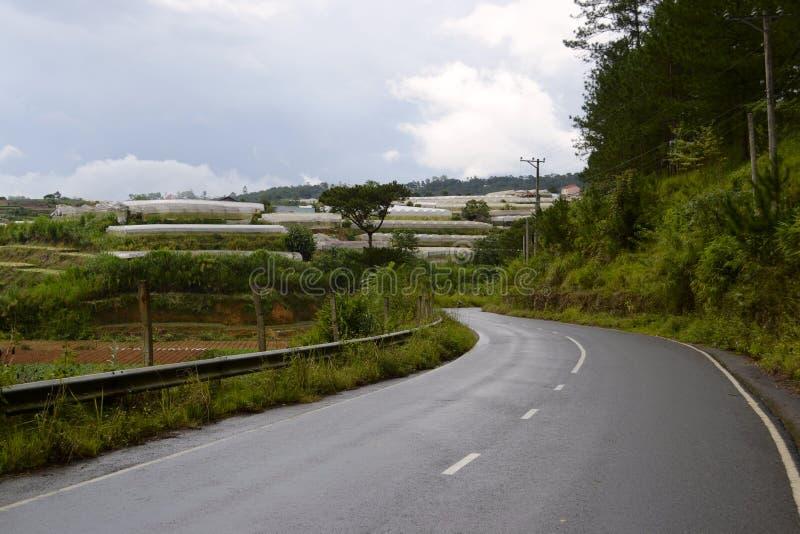 Route goudronnée incurvée le long des fermes vertes de forêt et d'agriculture avec des serres chaudes photo libre de droits