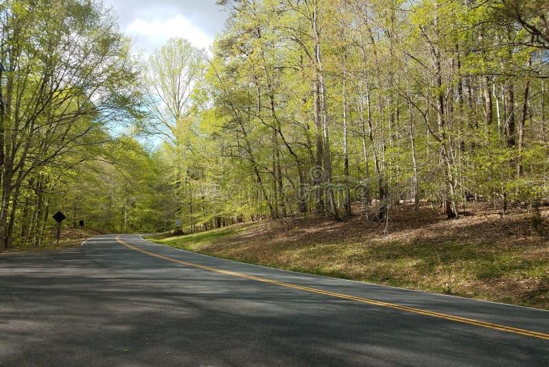Route goudronnée ou rue et arbres incurvés dans la forêt photographie stock libre de droits
