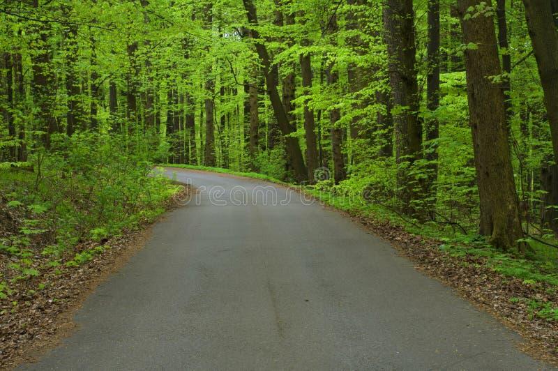 Route goudronnée par la forêt images libres de droits