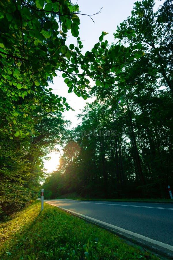 Route goudronnée par la forêt verte photos stock