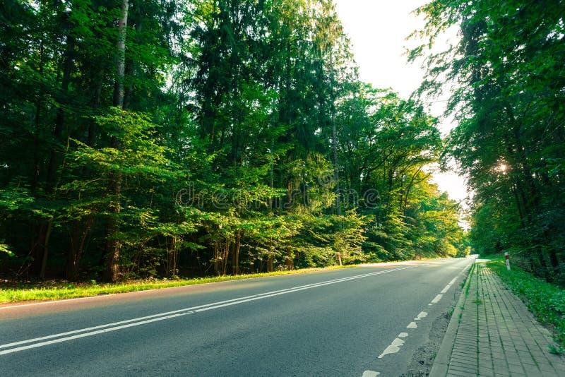Route goudronnée par la forêt verte images libres de droits