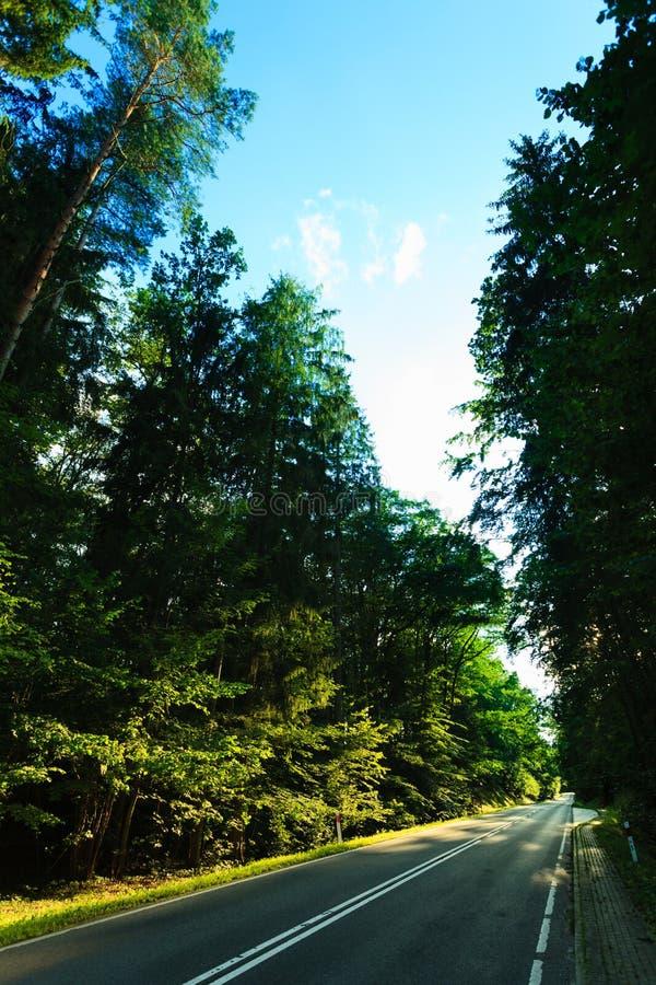 Route goudronnée par la forêt verte photo libre de droits