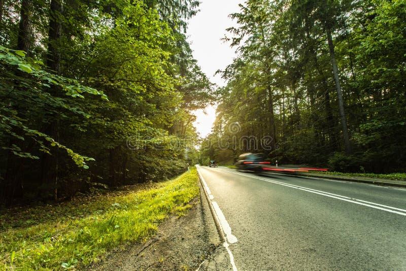 Route goudronnée par la forêt verte photo stock