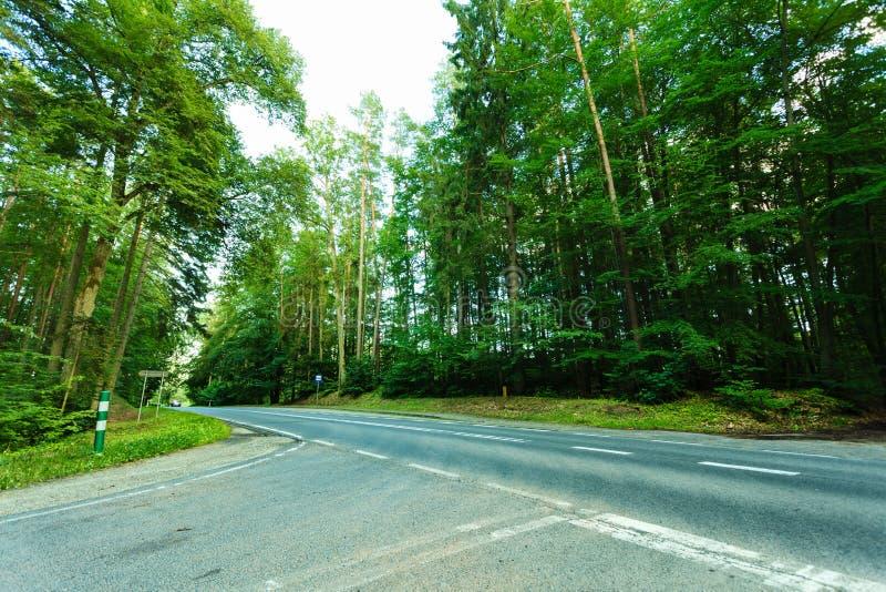Route goudronnée par la forêt verte image stock