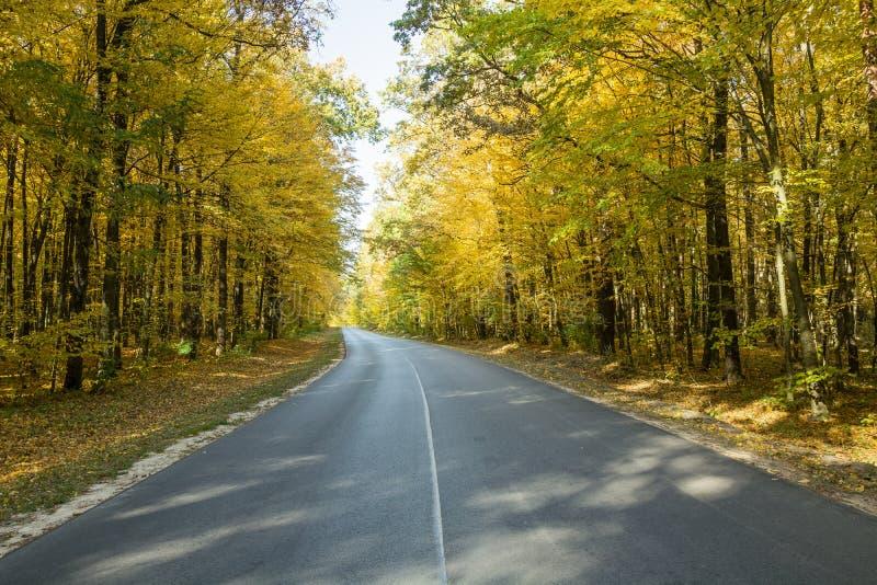 Route goudronnée par une forêt d'automne images libres de droits