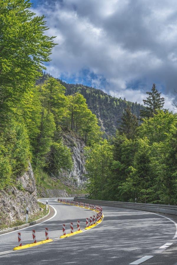 Route goudronnée sinueuse dans la forêt aux alpes photos libres de droits