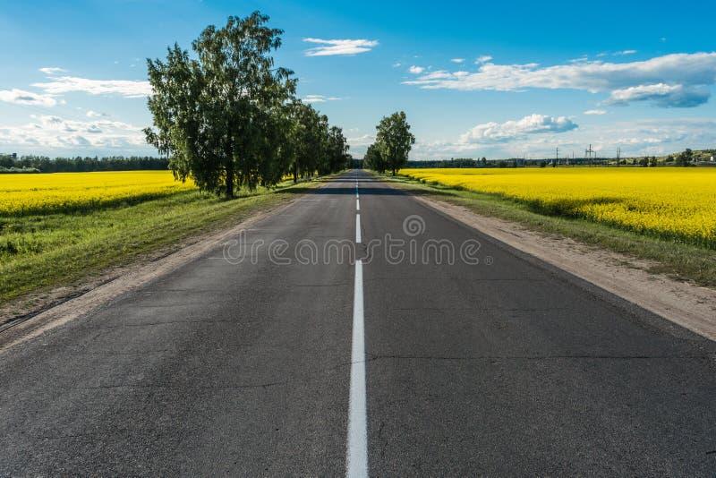 Route goudronnée vide et champ floral des fleurs jaunes images stock