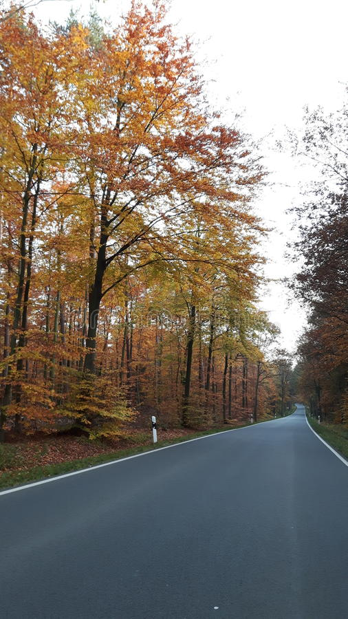 Route Heath Forest Autumn Fall photos libres de droits