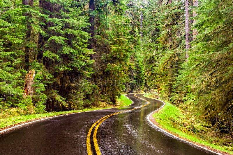 Route humide d'enroulement par une forêt verte luxuriante photos libres de droits