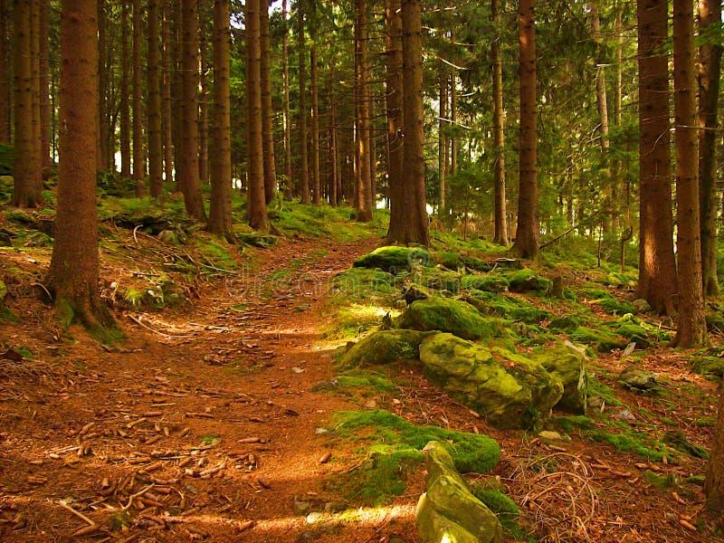 Route incurvée dans la forêt photographie stock libre de droits