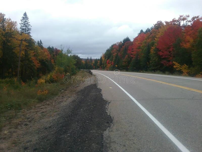 Route incurvée en parc d'algonquin photos libres de droits