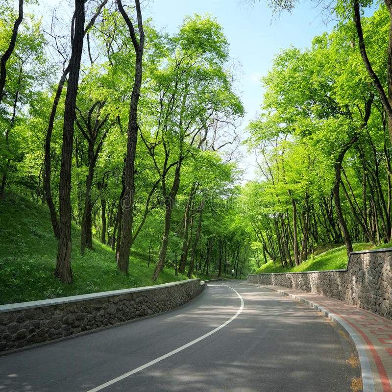 Route incurvée entre les arbres verts images stock