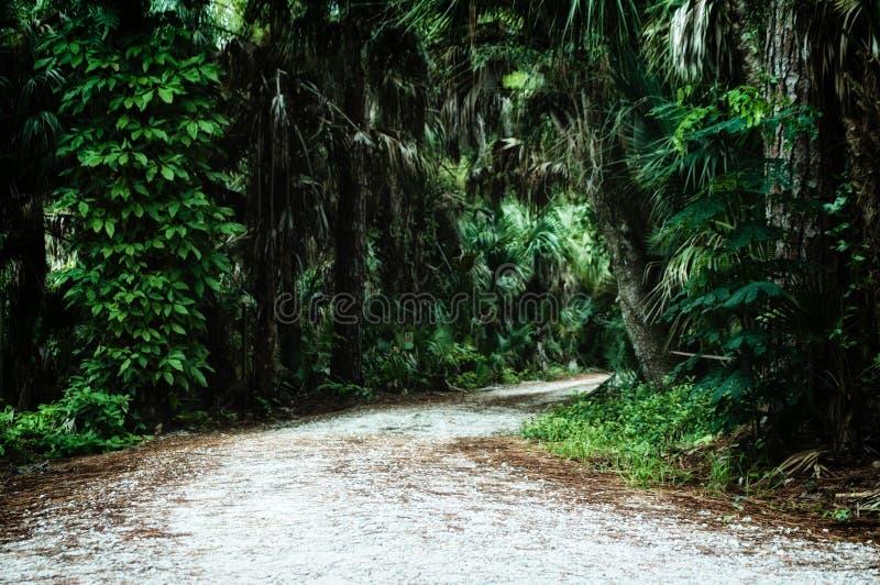 Route menant par la sous jungle tropicale photos libres de droits