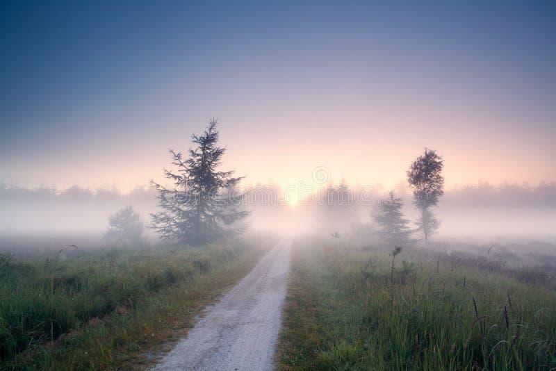 Route moulue dans le brouillard au lever de soleil photo libre de droits