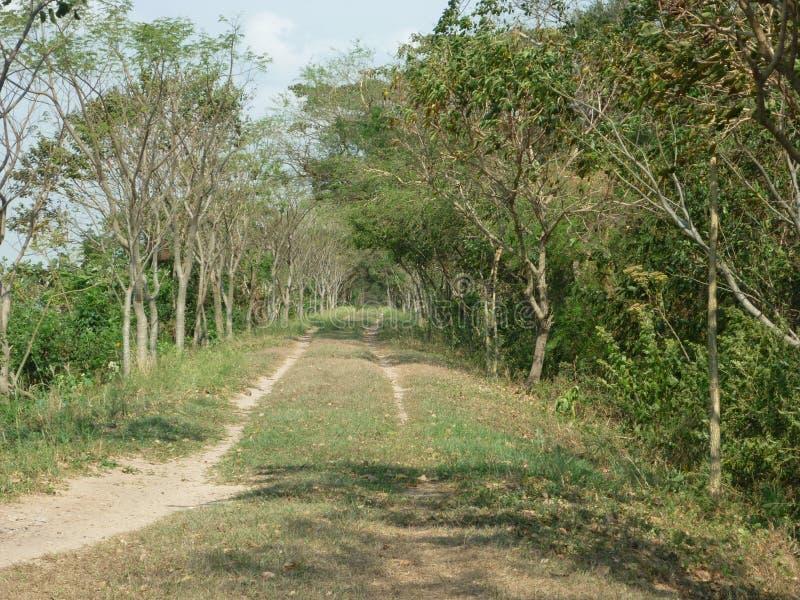 Route mystérieuse image libre de droits