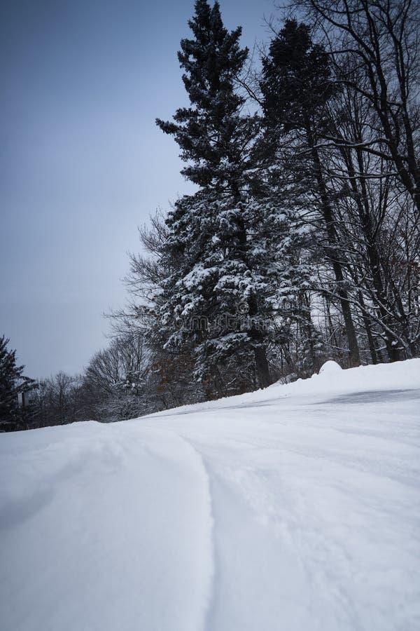Route neigeuse froide en parc image stock