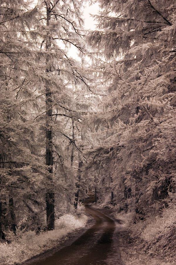 Route nordique images stock
