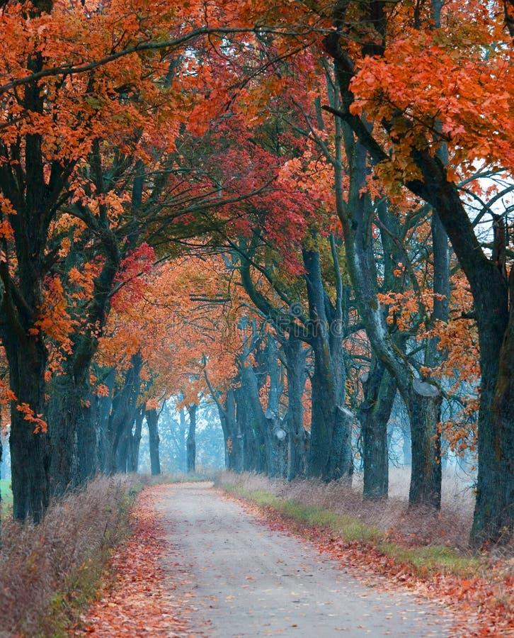 Route orange d'automne photographie stock