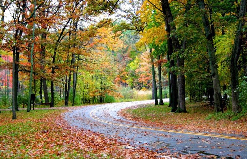 Route par la forêt images stock