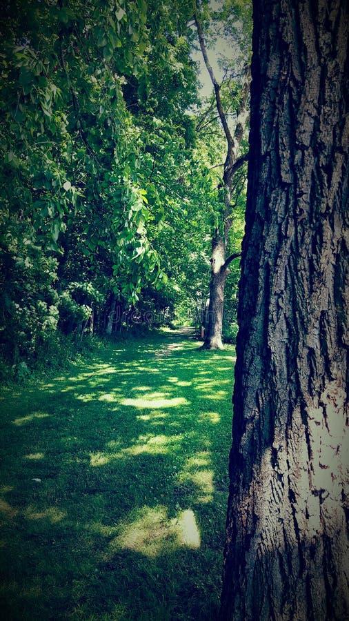 Route par la forêt photographie stock libre de droits