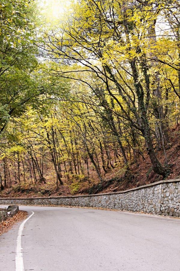 Route par la forêt d'automne images libres de droits