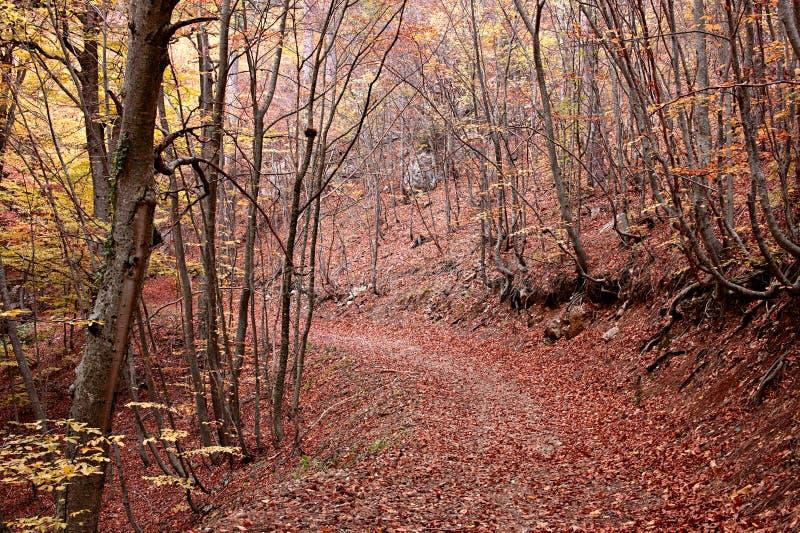 Route par la forêt d'automne image stock
