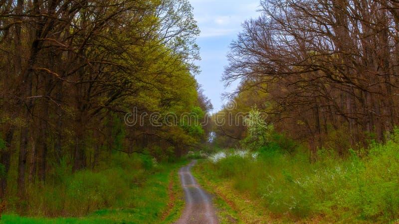 Route par la for?t image stock