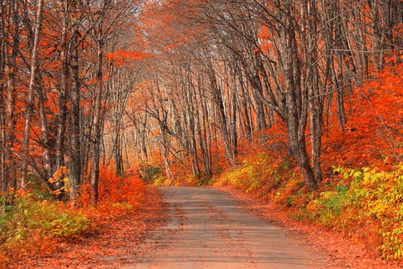 Route par le parc national de Parc de la Jacques-cartier au Québec photographie stock